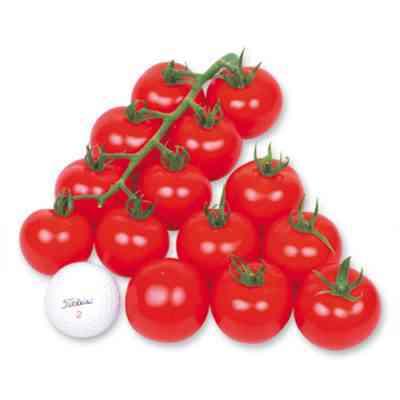 世界のトマトワンダーの説明