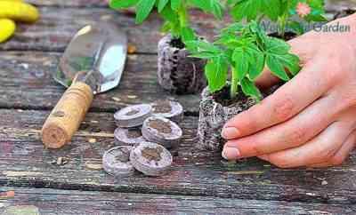2018年の太陰暦にトマトの苗を植える