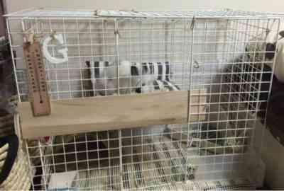 自分でウサギの檻を作る