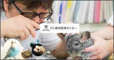 ママのウサギなしで独立して新生ウサギを養う方法