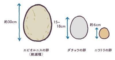 ガチョウの卵の利点