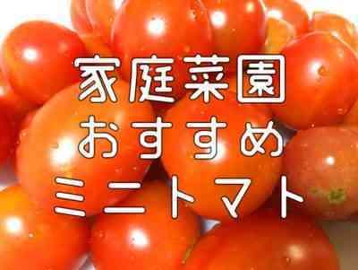 初心者トマト品種