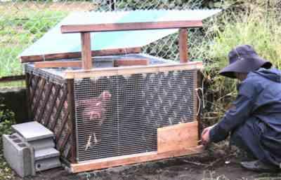 50羽の鶏用の鶏小屋の作り方