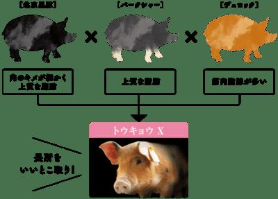 豚の給餌ルール