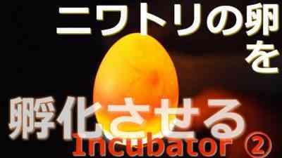 インキュベーターで鶏の卵を産む方法
