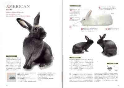 国内品種のウサギの説明