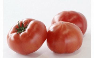 初期のトマトキングの説明と特徴