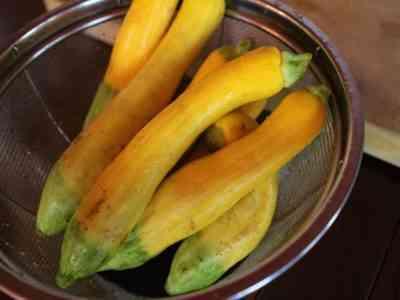 ズッキーニの最高の品種、または完璧な収穫を達成する方法