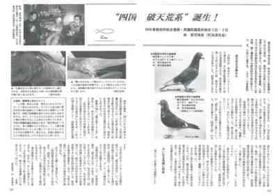 感謝の鳩の特徴