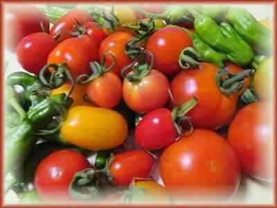 タイタントマトの特徴