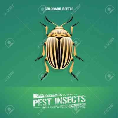 コロラドハムシ殺虫剤