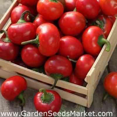コショウトマトの品種