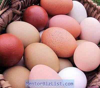 鶏のクチンスキー記念品種の栽培と育種の特徴