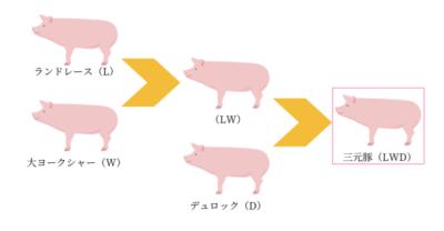 豚と子豚の飼料の作り方と正しい組成の選び方