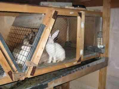 Zolotukhinの方法によるウサギ用のデバイスケージ