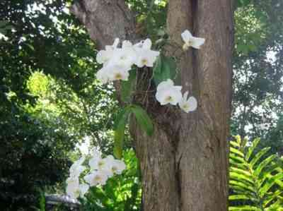 自然の中で蘭の成長の特徴