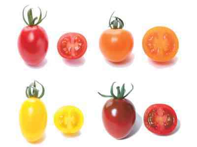 形のないトマトの品種