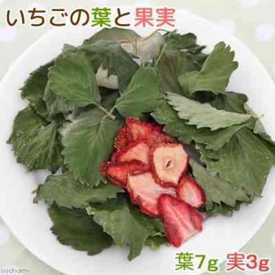 果樹の葉はウサギの食事にどのように加えることができますか