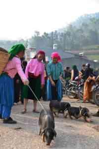 ベトナムの子豚を育てる