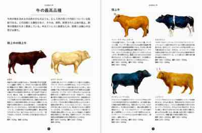 牛の体の円錐を治療する