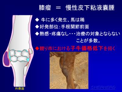 牛と子牛の関節を治療する方法
