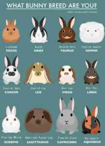 ウサギについての興味深い事実