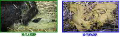 子牛のサルモネラ菌を治療する方法