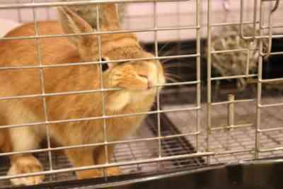 ウサギが木製ケージをかじった場合の対処法