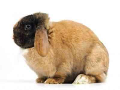 家でウサギを肉用に肥やす方法