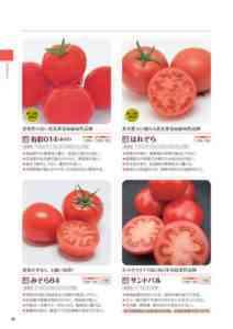 トマト品種ピンクドリームf1