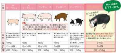 豚の主な肉種