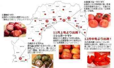 黒真珠トマトの特徴