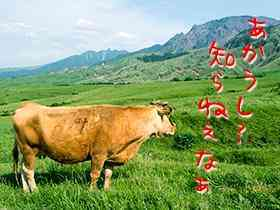 赤い草原品種の牛の特徴