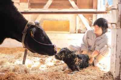 子牛を出産した後、立ち上がらない場合の対処法