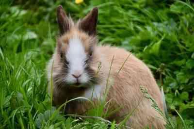 ウサギに与えることができる草とそうでない草