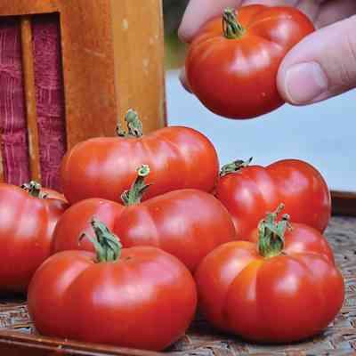 ビーフステーキトマトの特徴