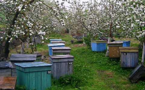 .月に養蜂場で何をすべきか