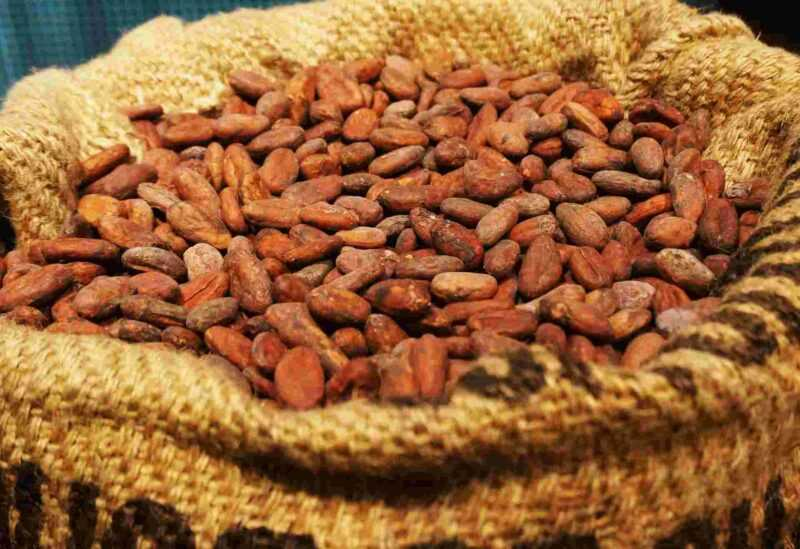 カカオ豆 - カカオ豆の有用で危険な特性、カロリー、利点と害、有用な特性