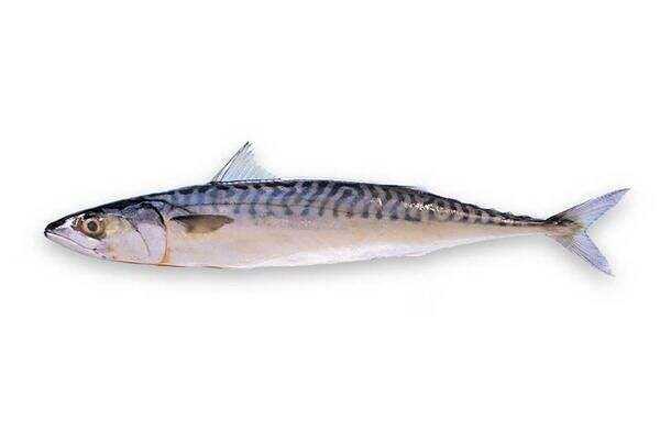 バルト海のニシン、カロリー、利点と害、有用な特性