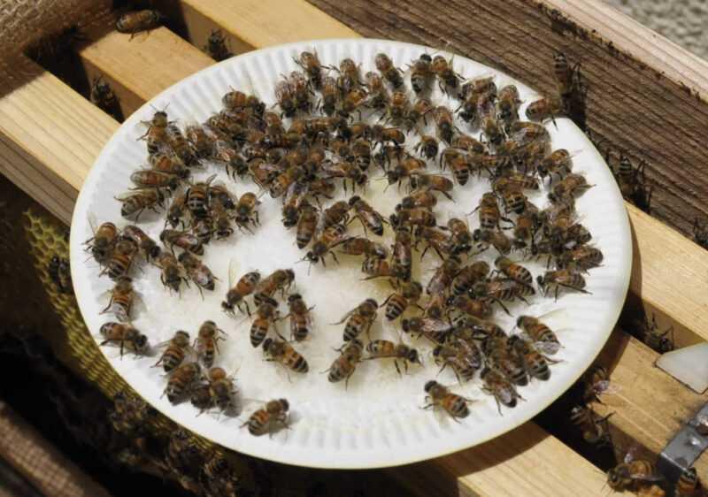 ミツバチのパビリオンを作る方法は?