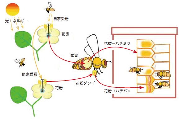 ミツバチの利点は何ですか?