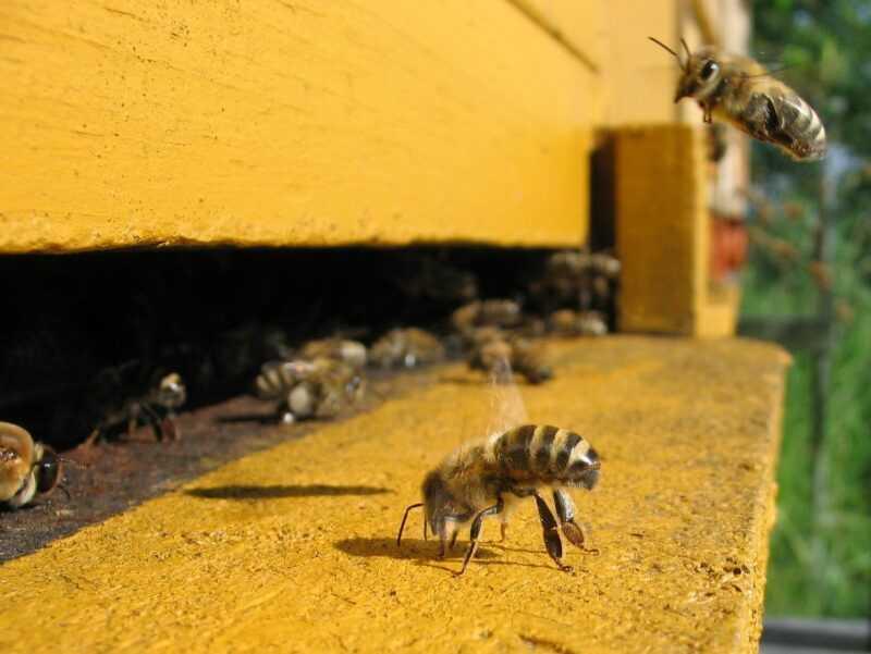 ミツバチの春の摂食:さまざまな種類の摂食