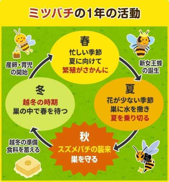 ミツバチの繁殖方法は?