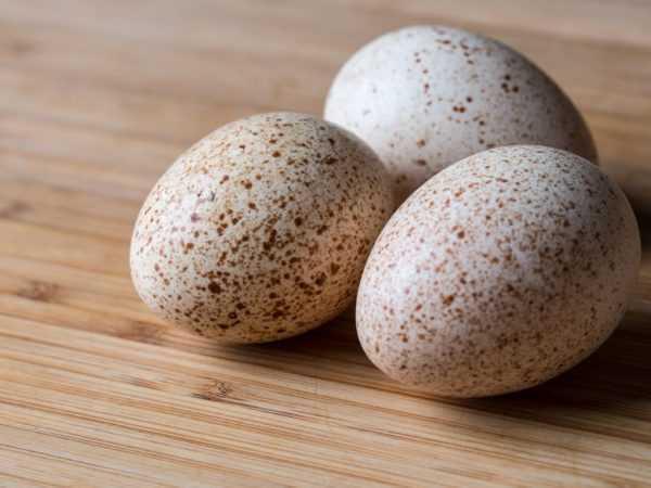 七面鳥の卵, カロリー, 利点と害, 有用な特性