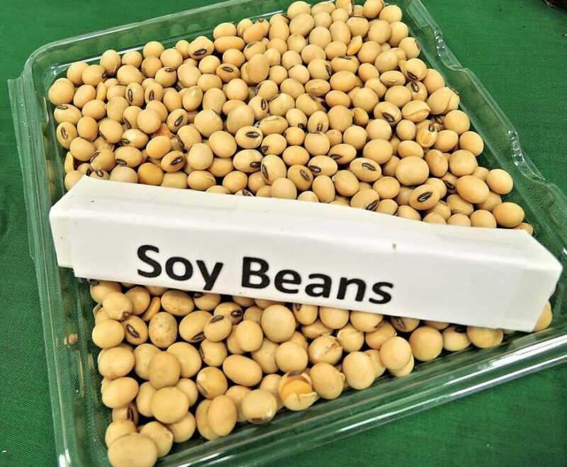 大豆油, カロリー, 利点と害, 有用な特性