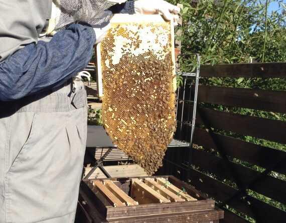 春にきれいな巣箱にミツバチを移植する方法は?