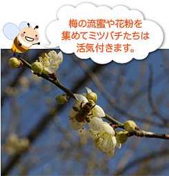 春にミツバチの成長を加速する方法は?