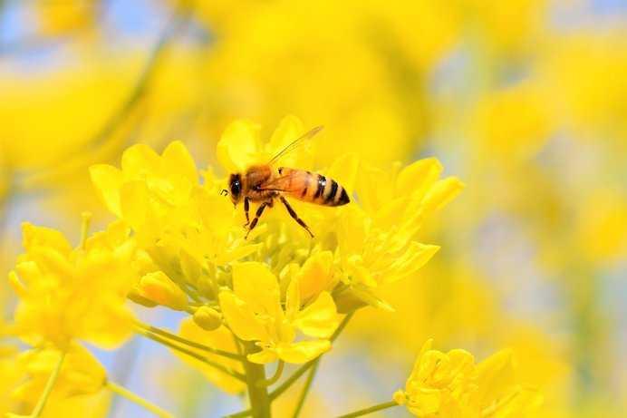 春のミツバチの適切な世話