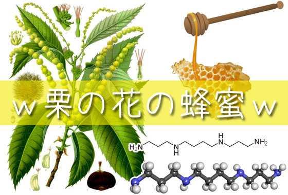 栗の蜂蜜が役立つのはなぜですか、それは砂糖漬けですか、偽物を識別する方法