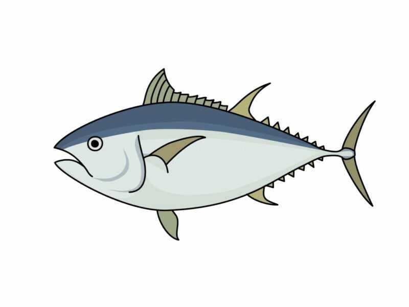 白身魚, カロリー, 利点と害, 有用な特性
